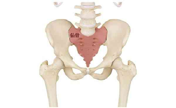 医師監修】妊婦の坐骨神経痛は珍しくない?症状と原因、対処法 | マイナビウーマン子育て