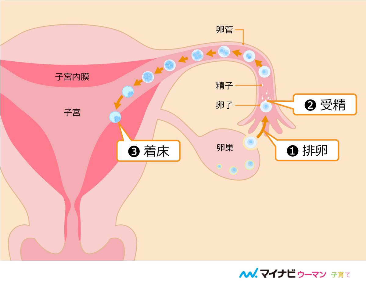 後 安静 射精 妊娠