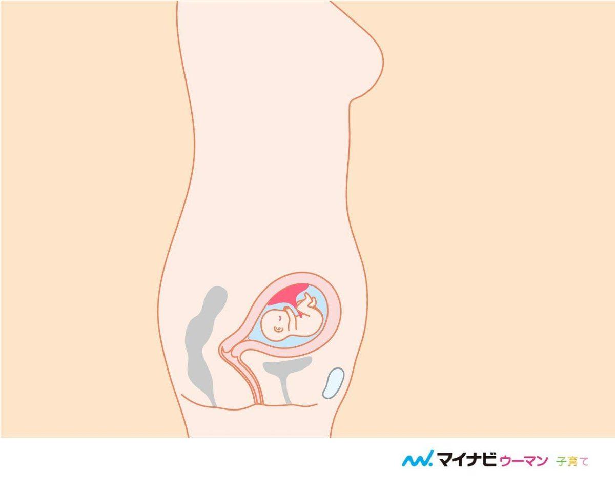 妊娠 6 ヶ月 胎動