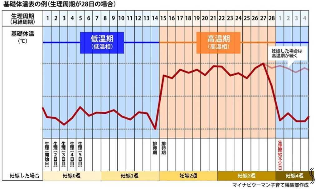 妊娠した場合の基礎体温表グラフ例